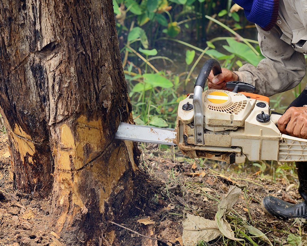 Tree Service Granite Bay - Tree Removal