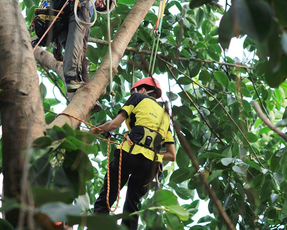 Tree Service Granite Bay - Emergency Tree Removal